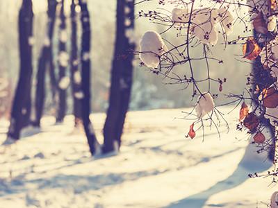 L'essentiel pour l'hiver